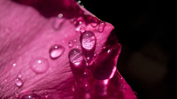 Water and Blush - image gratuit #324205