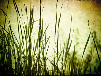 Textured Grass - Free image #324355