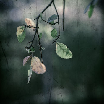 Season's End - бесплатный image #324385