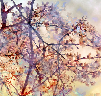 BranchesAndBlossoms1 - Free image #324615