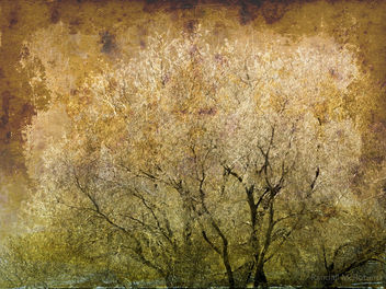 Spring Tree - Free image #324645