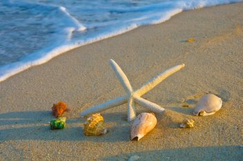 Sea star on the beach - image #326535 gratis