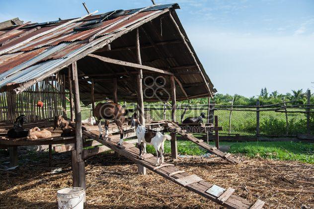 chèvres dans une exploitation agricole - image gratuit #328115