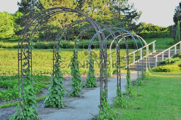 Arcos con planta de uva en el parque de verano - image #328445 gratis