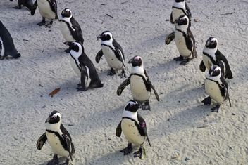 Group of penguins - image gratuit #328455