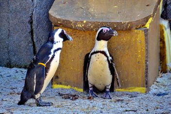 Couple of penguins - image #328505 gratis