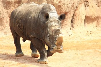Rhino walking in the Zoo - бесплатный image #328535