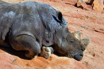 Rhino resting lying on the ground - image #328545 gratis