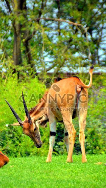 couple of antelope - Free image #328655