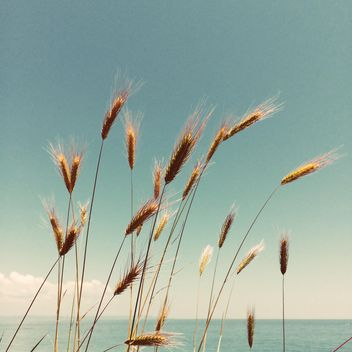 Spikelets on shore of river - image gratuit(e) #329115