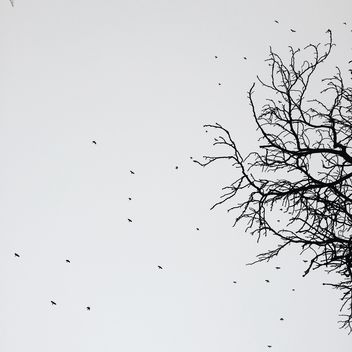 tree and birds in winter - image #329275 gratis