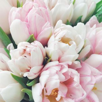 Beautiful spring tulips - Kostenloses image #329285