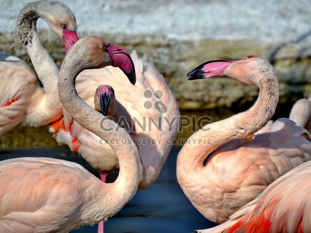 Розовый Фламинго в парке - бесплатный image #329885