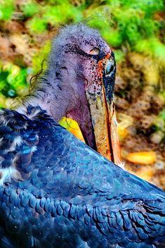 Marabu in park - image #329915 gratis