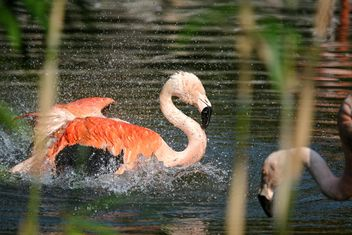 Flamingo in park - image #329925 gratis