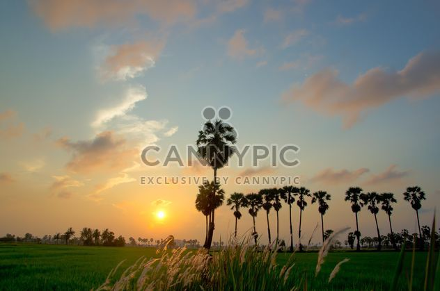 sunset on the field - Free image #330015