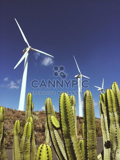 Landscape of cactus and windmills - image gratuit(e) #330845