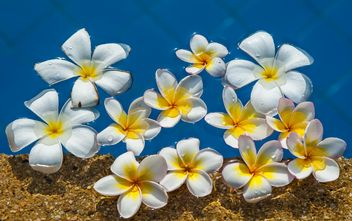 Close up of Plumeria on water - image gratuit #330885