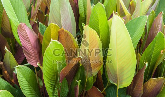 Green foliage of different tones - Free image #330955
