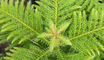 Green fern foliage - Free image #330965