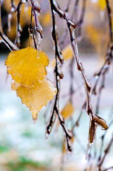 Autumn foliage - бесплатный image #330975