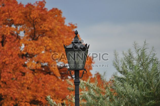 Autumn foliage and lattern - Free image #331015