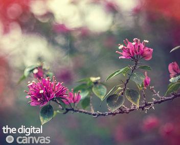 blossum bokeh - бесплатный image #332485