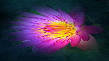 Lotus - Kostenloses image #332525