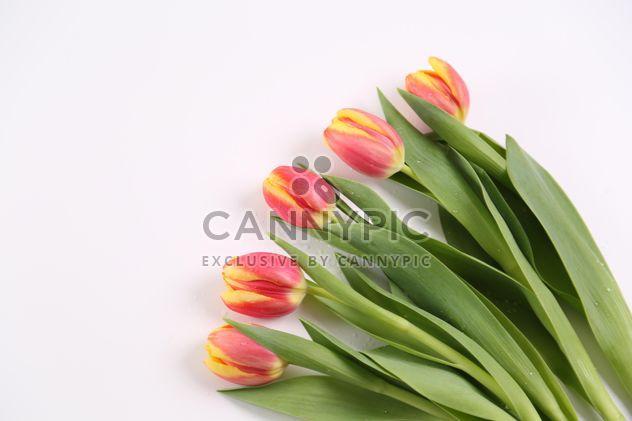Primera frescas de la temporada cortadas tulipanes - image #333245 gratis
