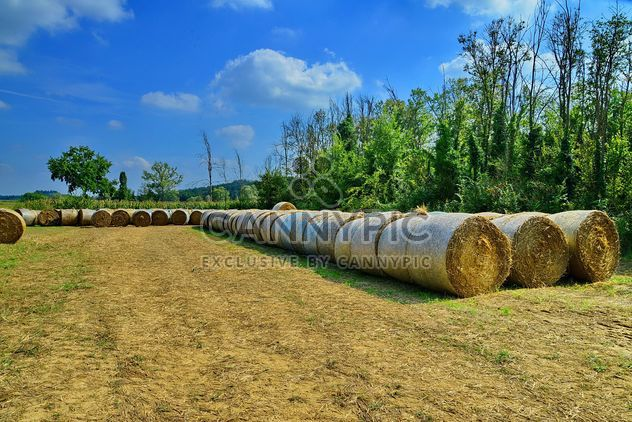 Countryside agriculture - Kostenloses image #333745