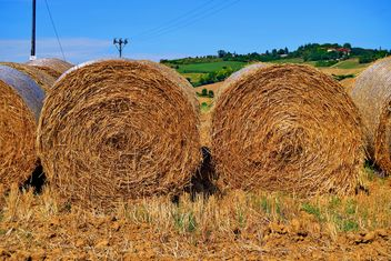 Haystacks, rolled into a cylinders - image gratuit #334735