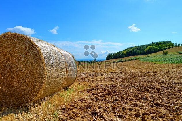 Haystacks, rolled into a cylinders - Kostenloses image #334745