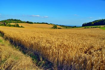 Golden wheat field - image gratuit #334805