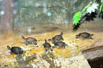 Little tortoises - Free image #335055