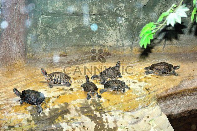 Little tortoises - image gratuit(e) #335055