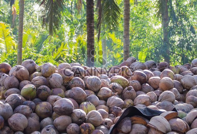 Coconut texture - Free image #335195