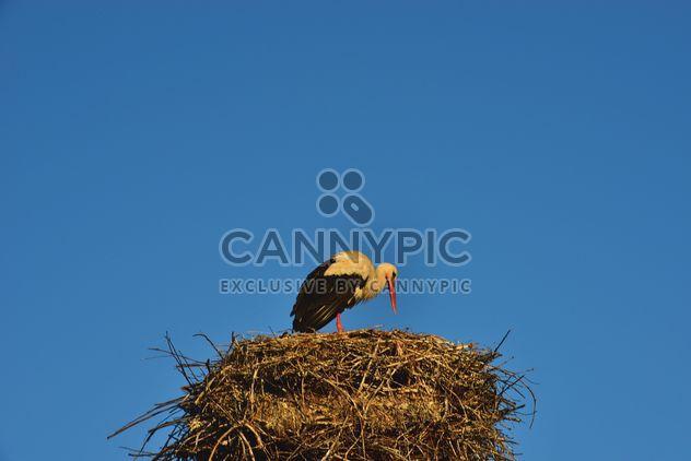 Cigüeña en el nido contra el cielo - image #337565 gratis
