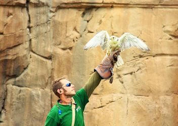 Falconer holding falcon - бесплатный image #337805
