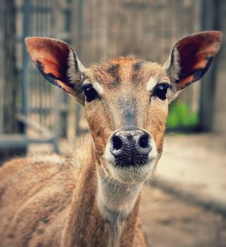 Portrait of female deer - Free image #338285