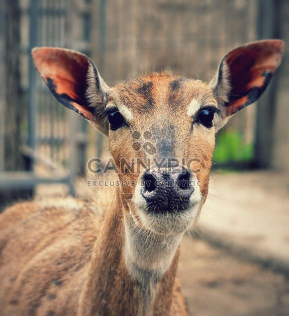 Portrait of female deer - Free image #338285