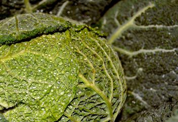 Closeup of Savoy cabbage - Free image #338305