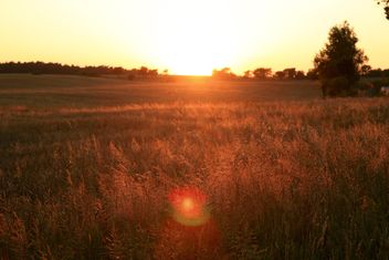 Field at sunset - image gratuit #338485