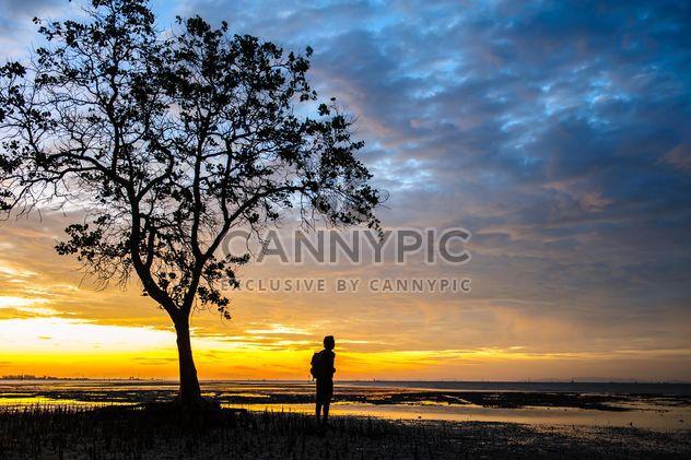 Человек под дерево на закате - бесплатный image #338595
