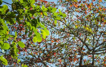 Colorful leaves on tree branches - image #338605 gratis