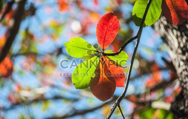 Разноцветные листья на ветке дерева - бесплатный image #338615