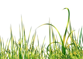 Green grass - vector gratuit(e) #338935