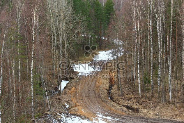 Landscape with road in forest - Free image #339185