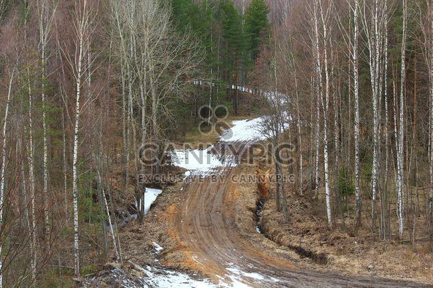 Paysage avec chemin en forêt - image gratuit(e) #339185