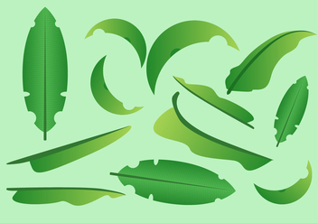 FREE BANANA LEAF VECTOR - бесплатный vector #339245