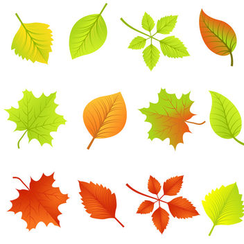 Vector Autumn Leaves - Free vector #340405